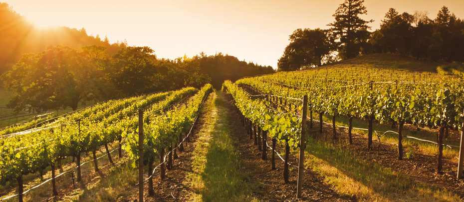 Wein-Aktionen bei Lidl Schweiz - Geniesse Deinen Moment