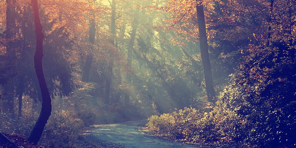 Herbstspaziergangstropfen